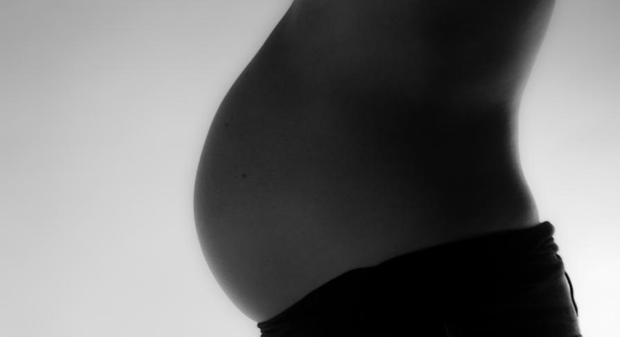 gravid